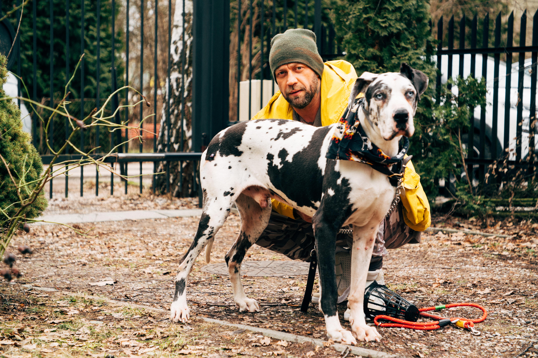 Duży nakrapiany biało-czarny pies ze swoim panem na spacerze