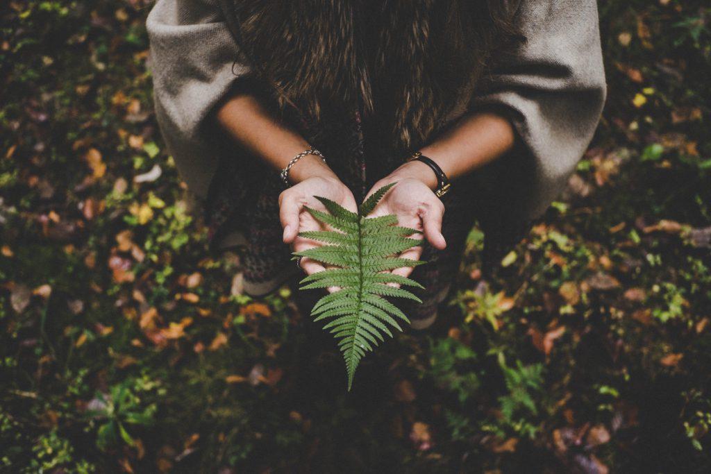 Kobiec ręce trzymające liść paproci w lesie