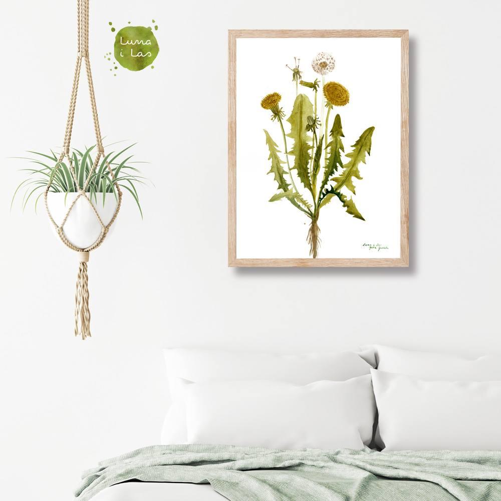 Obraz w drewnianej ramie przedstawiający roślinę - mniszka z kwiatami i dmuchawcem na jasnej ścianie z w sypialni nad łóżkiem